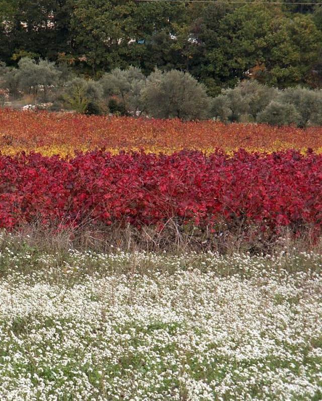 Un automne en provence