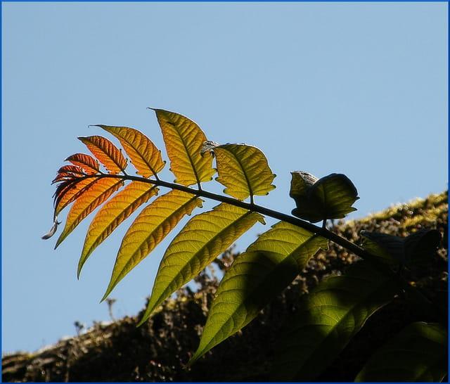 Un autre automne à venir
