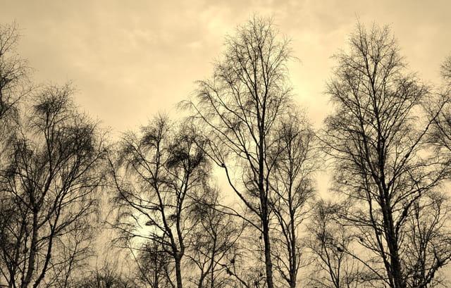Un autre regard sur les arbres!