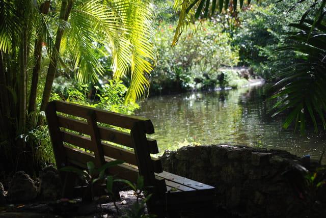 un banc pour respirer les parfums tropicaux