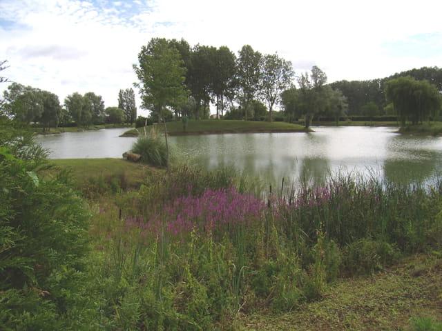 Un bien bel étang