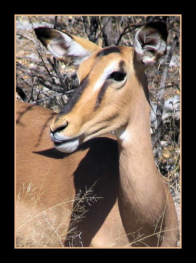 Un bisou Impala...