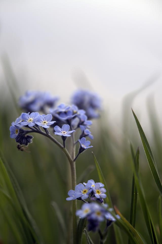 Un bouquet de fleurs bleues aux senteurs du matin