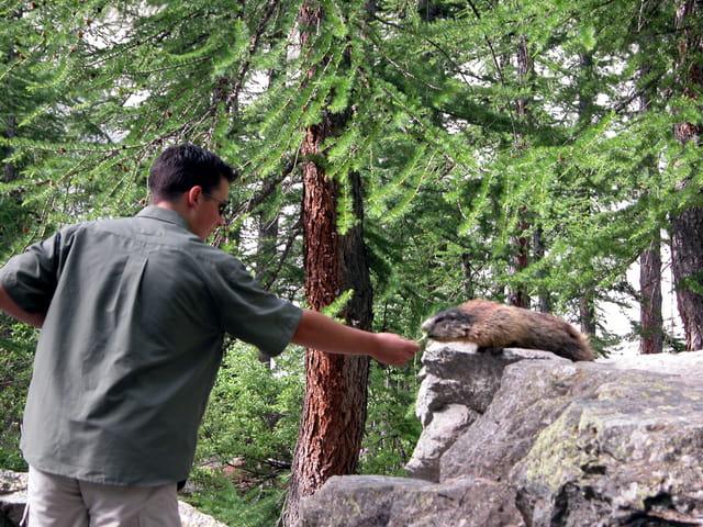 Un casse-croute de marmotte