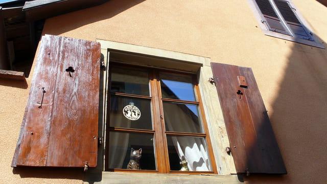 Un chat à sa fenêtre