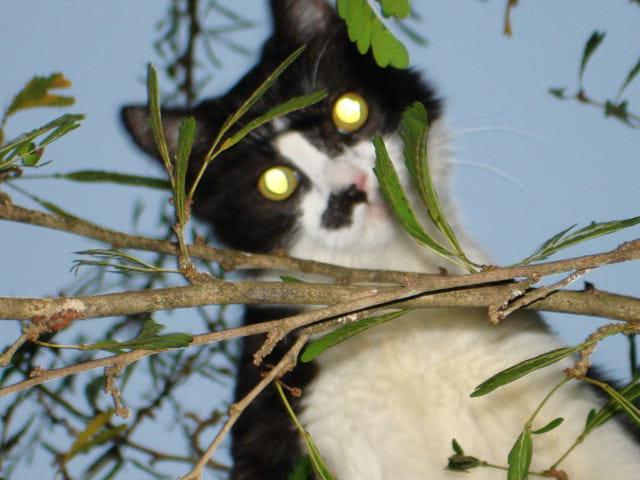 Un chat dans l'arbre