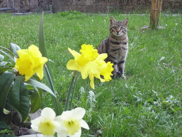 Un chat dans le jardin