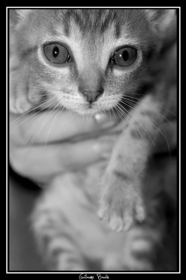 Un chaton pas comme tout le monde ...