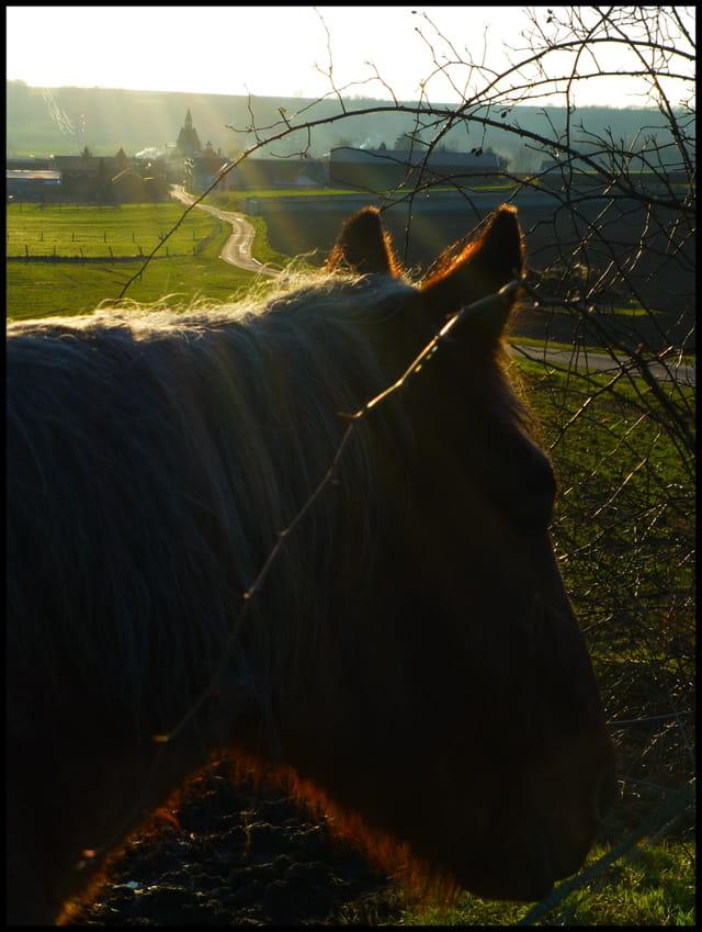 Un cheval à Nanteuil