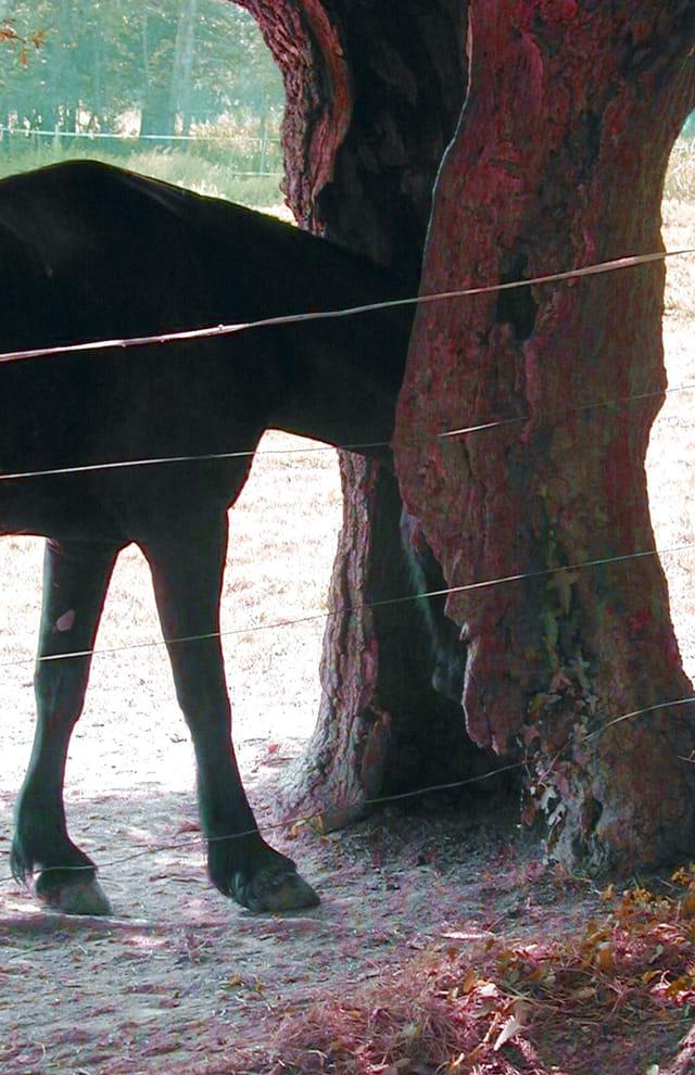 Un cheval timide...
