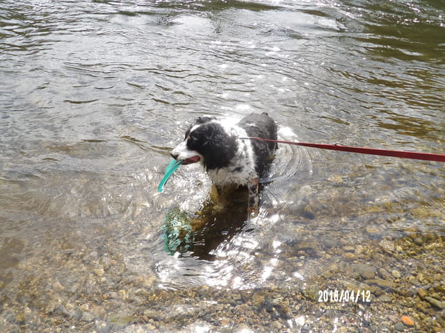 Un chien d'eau