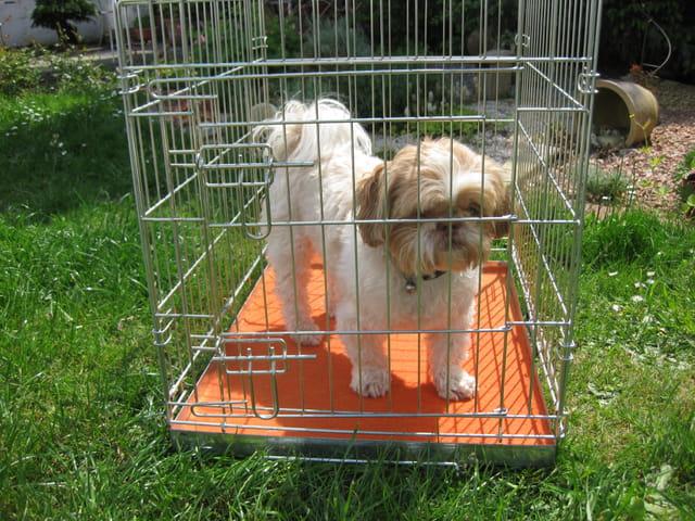 Un chien dans une cage