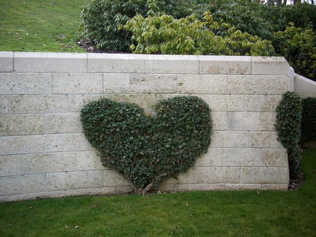Un coeur de lierre