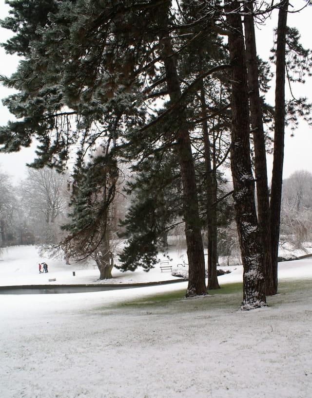 Un coin de vert sous la neige