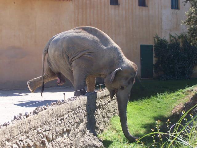 Un drôle d'élephant !!