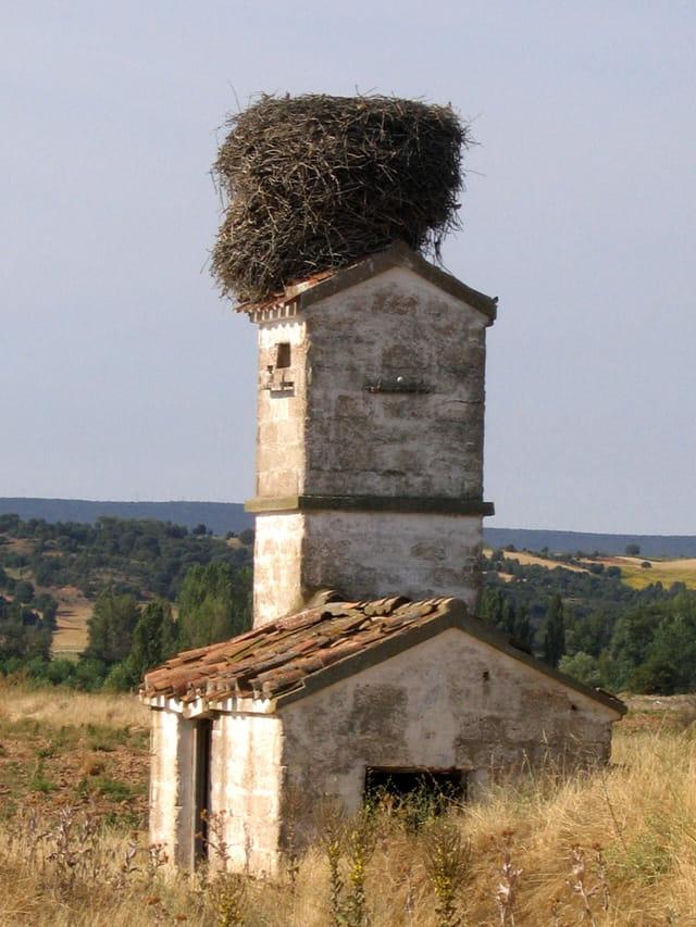 Un grand nid