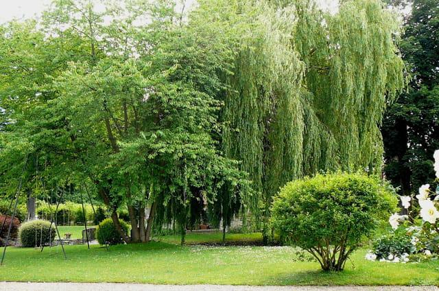 Un jardin bien verdoyant