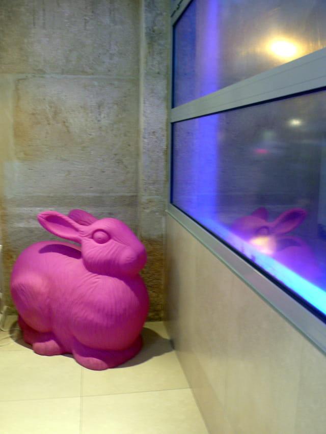 Un lapin à sa fenêtre...