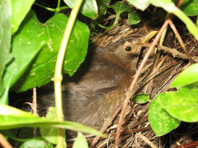 Un nid bien caché