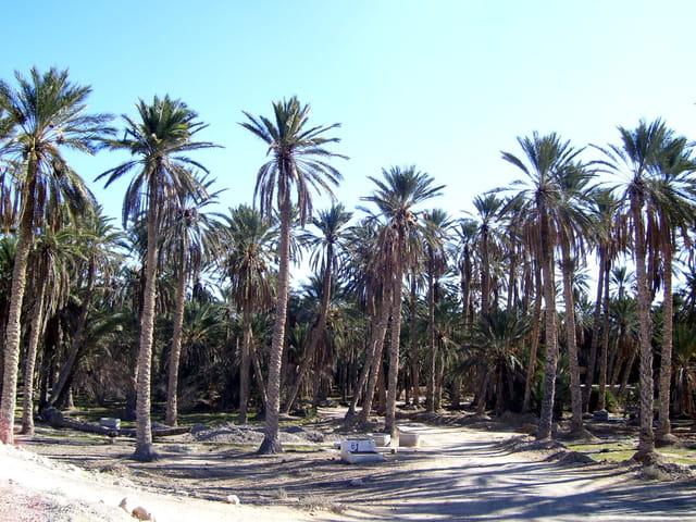 Un oasis à Gbéli