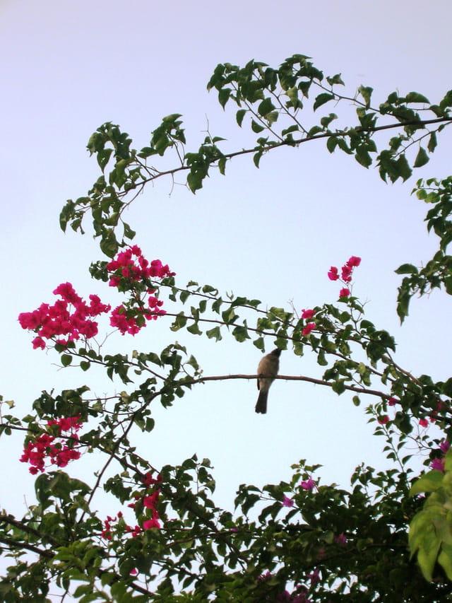 Un oiseau sur la branche