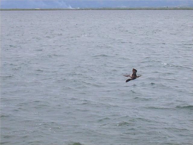 Un oiseau sur la mer