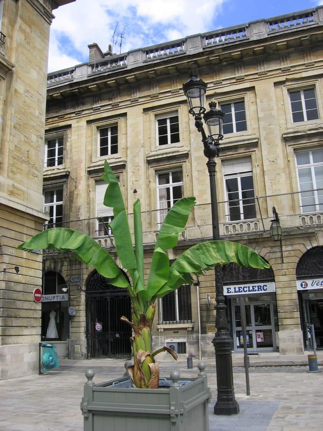 Un palmier dans la ville