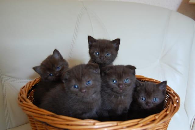 Un panier de chatons