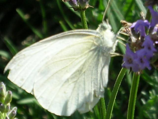 Un papillon en gros plan