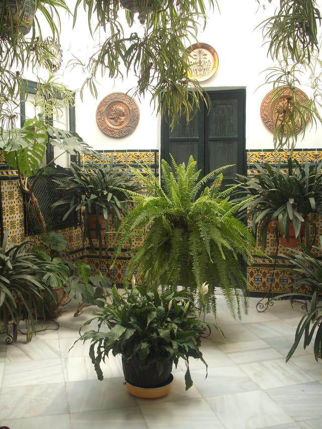 Un patio de Cordoue