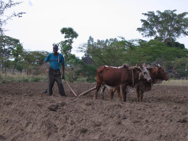 Un paysan éthiopien au 21ème siècle