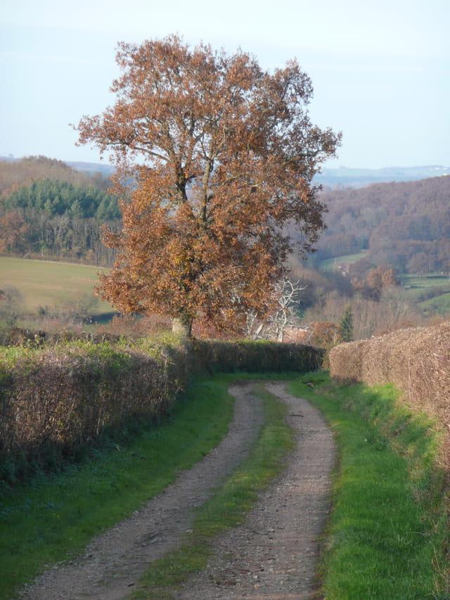 Un petit chemin... à l'automne
