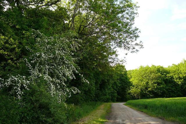 Un petit chemin charmant