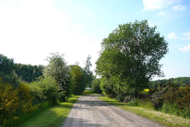 Un petit chemin charmant - 2