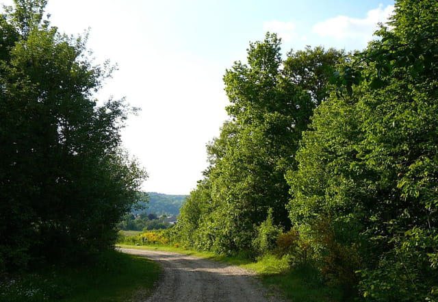 Un petit chemin charmant - 4
