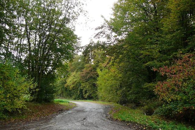 Un petit chemin en automne - 1