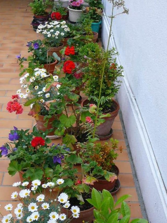 Un  petit coin fleuri de la terrasse en juin 2008