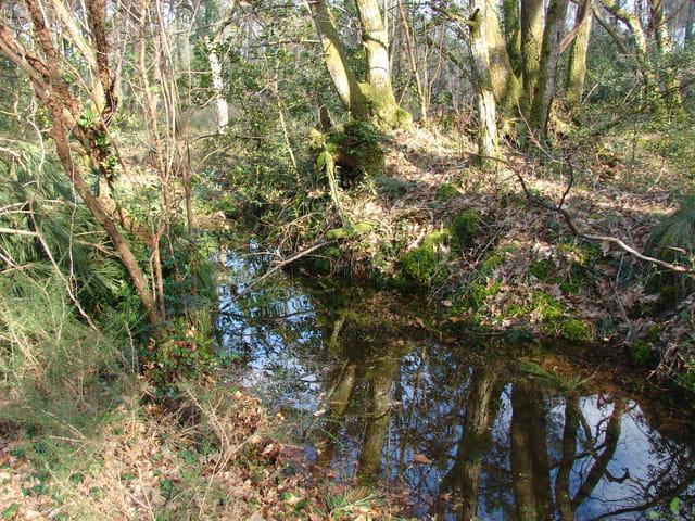 Un petit lagon dans la forêt landaise