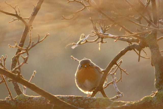 Un petit matin, un petit oiseau