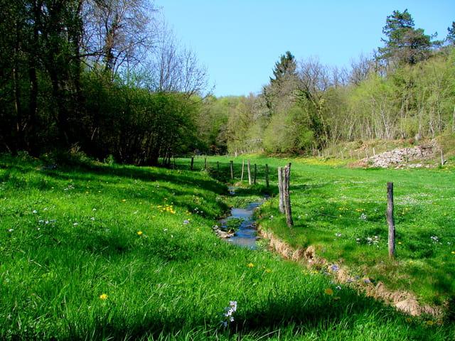 Un pré et un ruisseau
