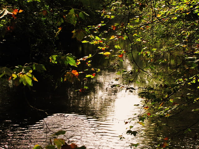 Un ruisseau....