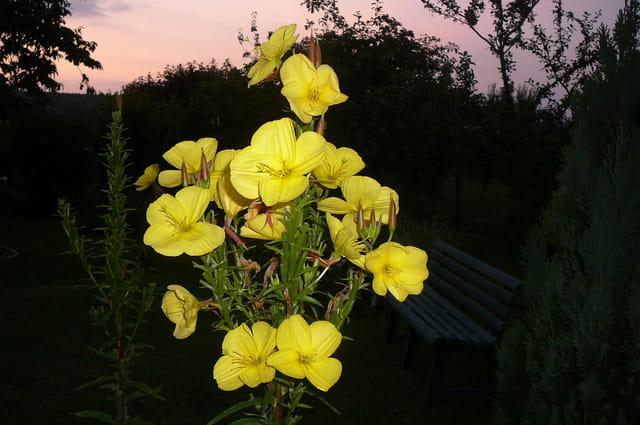 Un soir d'été dans le jardin
