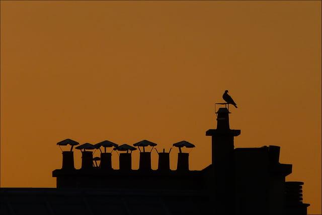 Un soir, un Pigeon