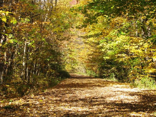 Un tapis de feuilles
