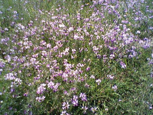 Un tapis de fleurs sauvages