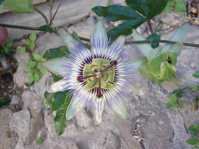 Una flor en el cielo