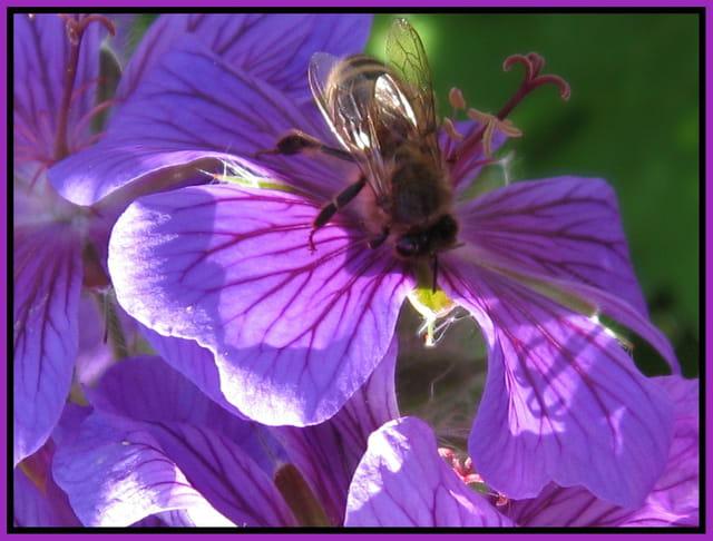 Une abeille au soleil