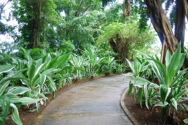 Une all e du jardin botanique par genevieve lapoux sur l for Bd du jardin botanique