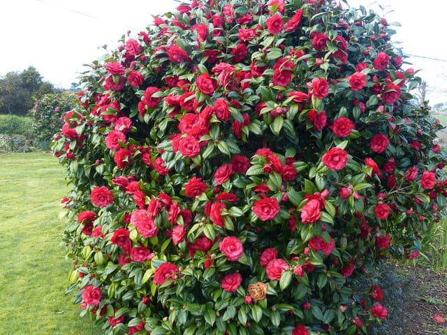 Une belle floraison rouge