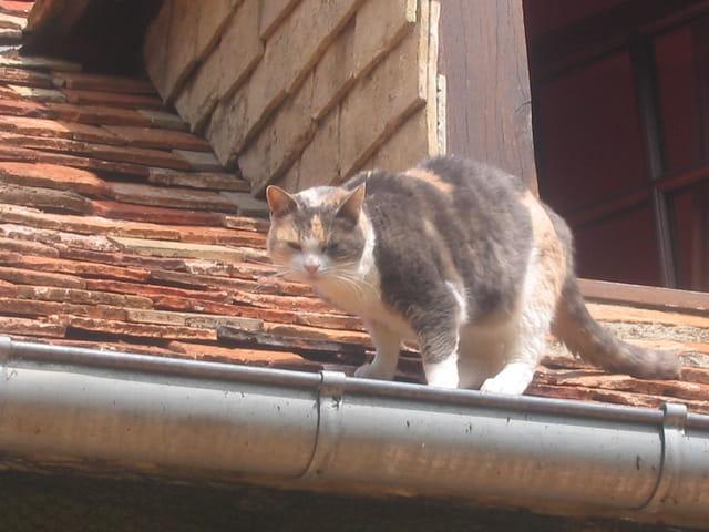 Une chatte sur un toit brûlant